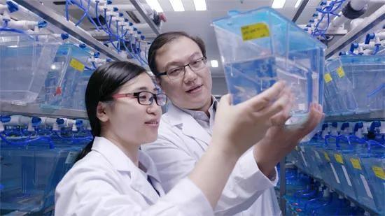 造血干细胞移植,造血干细胞归巢,