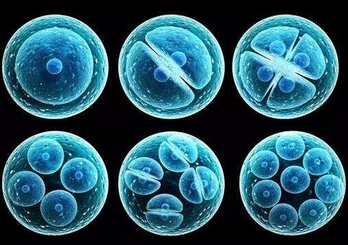 脐带间充质干细胞储存,脐带间充质干细胞研究